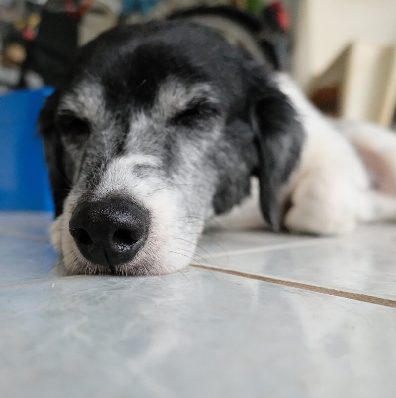 Brasilianische Hunde